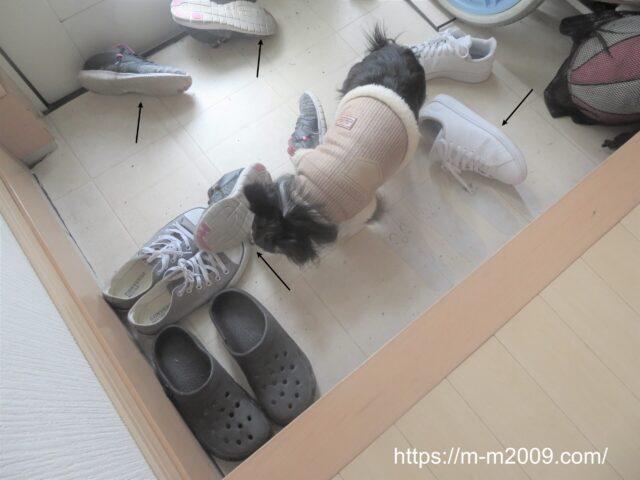 犯人はおまえかー!!こどもが靴を脱ぎ散らかしていると思ったら・・・汗